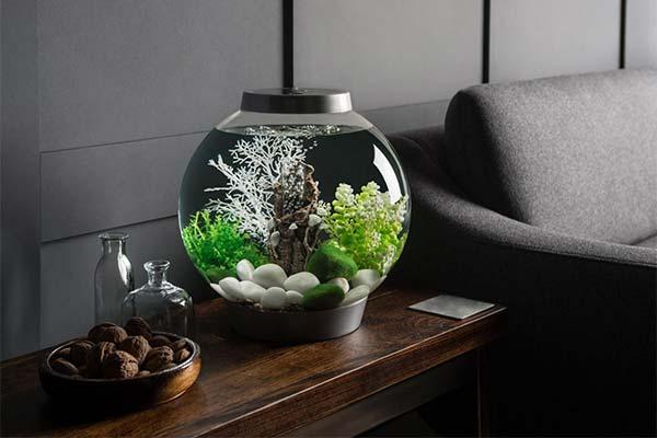 Сонник акваріум: до чого сниться і що означає сон про акваріум