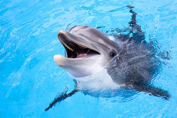 Сонник дельфіни: до чого сняться і що означають сни про дельфінів