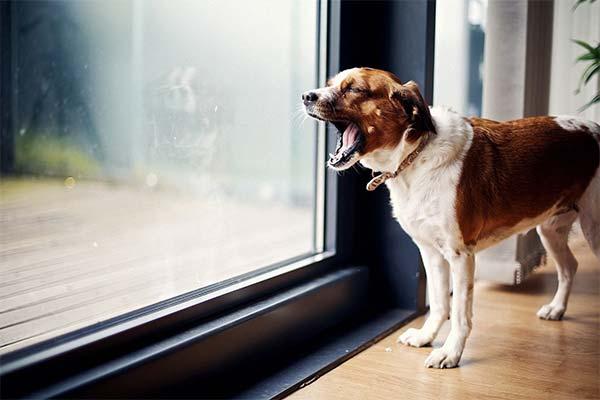 Сонник гавкіт собаки: до чого сниться і що означає сон про гавкаючий собаку