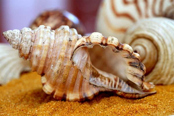 Сонник черепашки: до чого сняться і що означають сни про черепашки