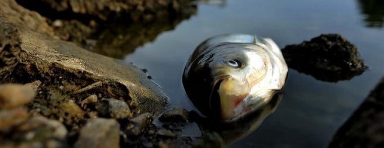 Еврейский сонник большие рыбы приснились — злословие.