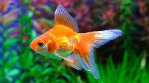 7b1b4610b3b2e8 Адже це джерело прожитку. Багатий улов робив моряків забезпеченими людьми.  А золотий окрас чарівної рибки з казки тільки підкреслює позитивність  образу.