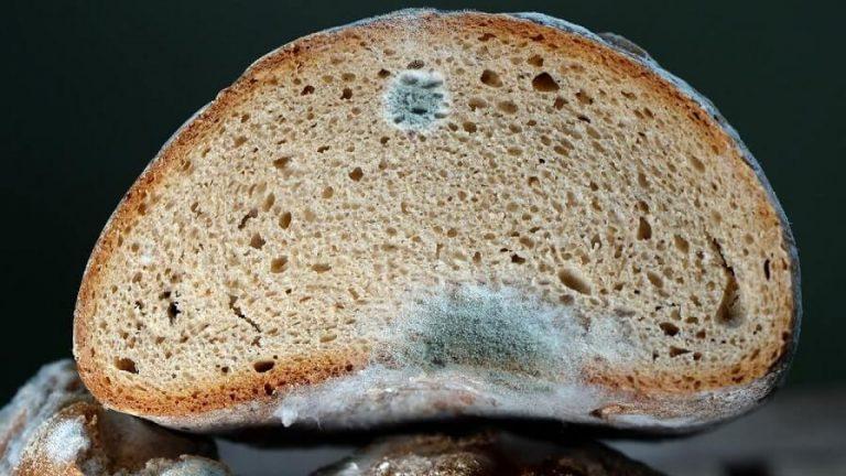 цвіль на хлібі