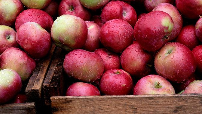 Що чекає на тих, хто постійно їсть яблука?