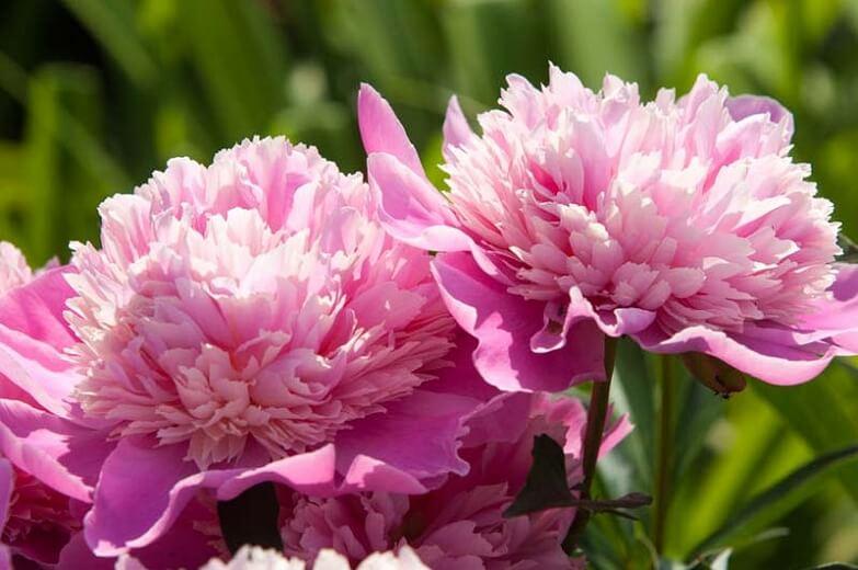 Как выбрать цветы для создания красивого сада