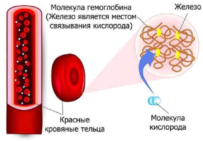 Як підвищити гемоглобін в крові