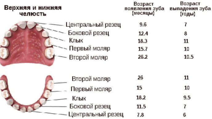Порядок випадання молочних зубів у дітей