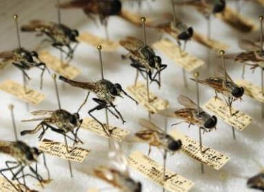 Як відрізнити малярійного комара від звичайного