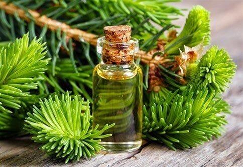 Ялицева олія: всі її лікувальні властивості