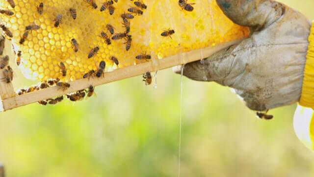 Корисні властивості меду білої акації