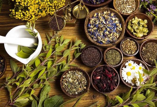лікарські трави використовують в лікуванні варикозу