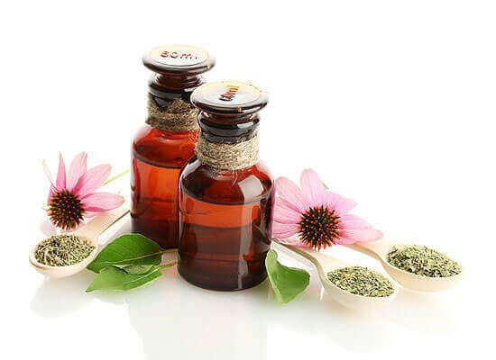 Лікувальні властивості і застосування настоянки ехінацеї