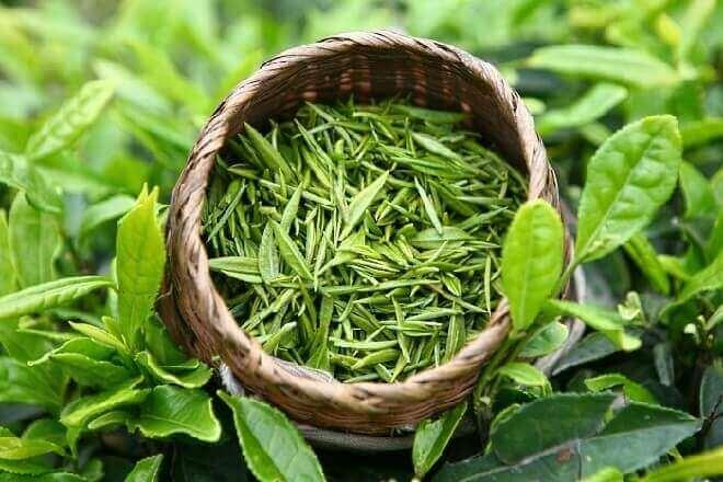 Зелений чай від гіпертонії