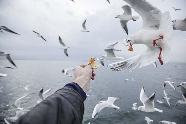 Сонник чайка: до чого сниться і що означає сон про чайку