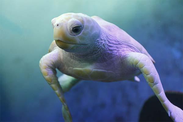 Сонник черепаха: до чого сниться і що означає сон про черепаху