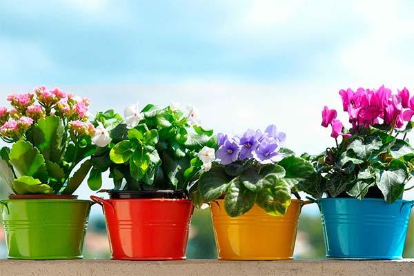 Сонник квіти в горщиках: до чого сниться і що означає сон про квітку в горщику