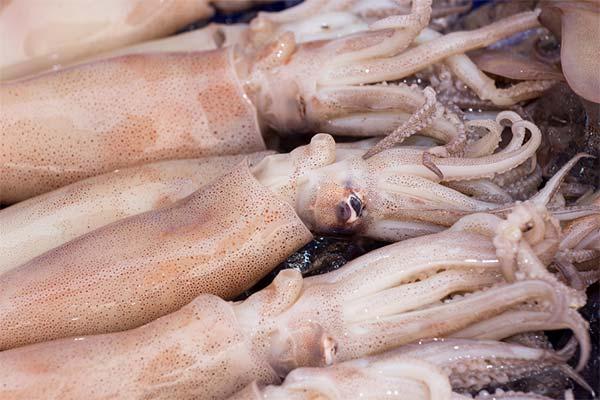 Сонник кальмар: до чого сниться і що означає сон про кальмара