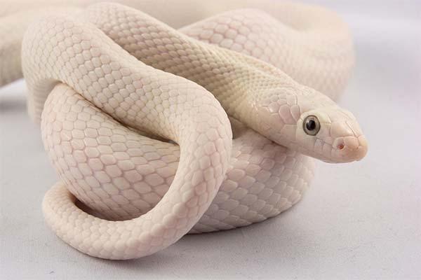 Сонник ловити змію: до чого сниться і що означає сон про ловити змію