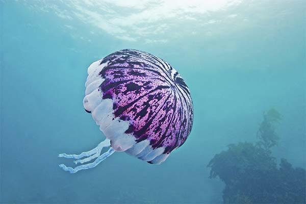 Сонник медуза: до чого сниться і що означає сон про медузу