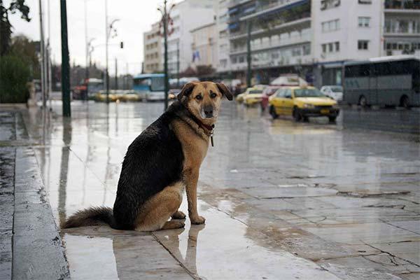 Сонник знайти собаку: до чого сниться і що означає сон про знайти собаку