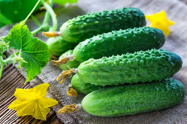 Сонник огірки: до чого сняться і що означають сни про огірки