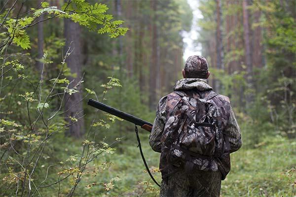 Сонник полювання: до чого сниться і що означає сон про полювання