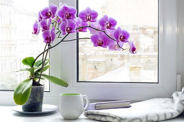 Сонник орхідея: до чого сниться і що означає сон про орхідею