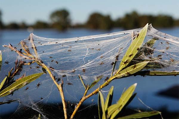 Сонник павутина: до чого сниться і що означає сон про павутину