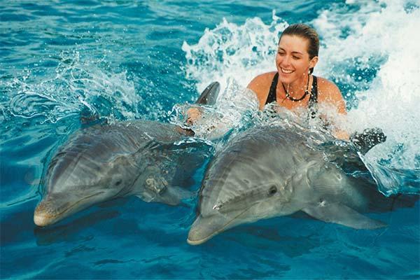 Сонник плавати з дельфінами: до чого сниться плавання з дельфінами