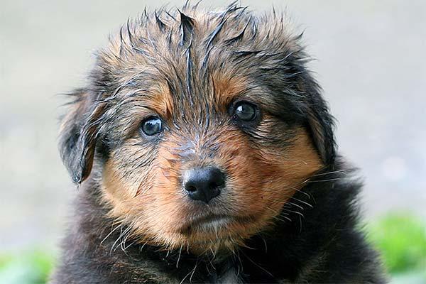 Сонник щеня: до чого сниться і що означає сон про цуценя
