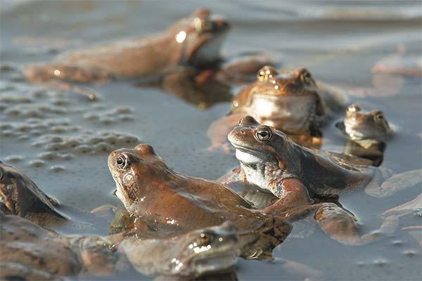 Сонник жаба: до чого сниться і що означає сон про жабу