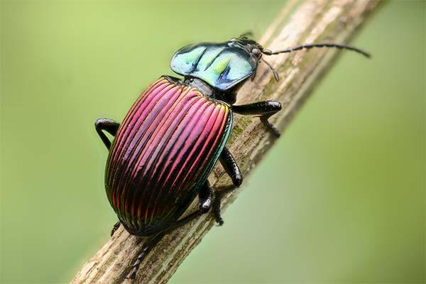 Сонник жуки: до чого сняться і що означають сни про жуків