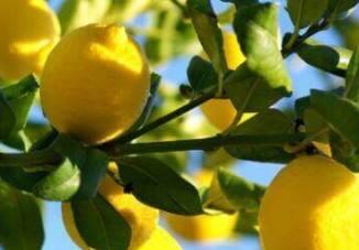 Лимон: корисні властивості