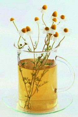 Лікувальні властивості ромашки та застосування