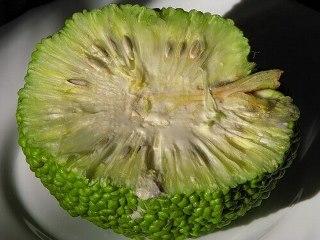 Приготування мазі з плоду маклюри