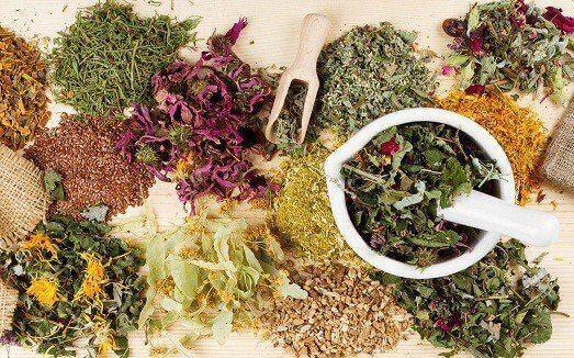 Календар збору лікарських рослин