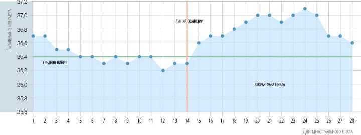 Нормальний двофазний графік базальної температури