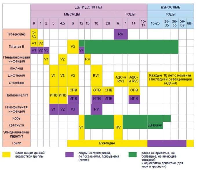 Терміни календаря профілактичних щеплень
