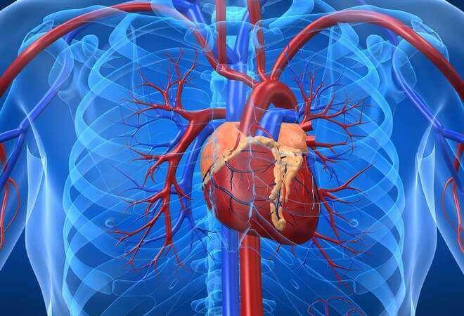 Що таке серцево-судинна дистонія?
