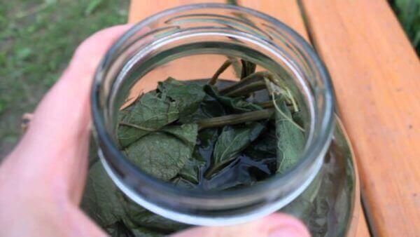Відвар з листя живокосту, лопуха