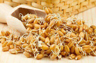 Пророщені зерна пшениці