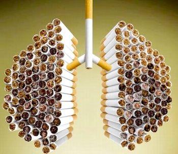 Частка легенів і бронхів