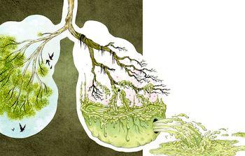 Як очистити легені і бронхи